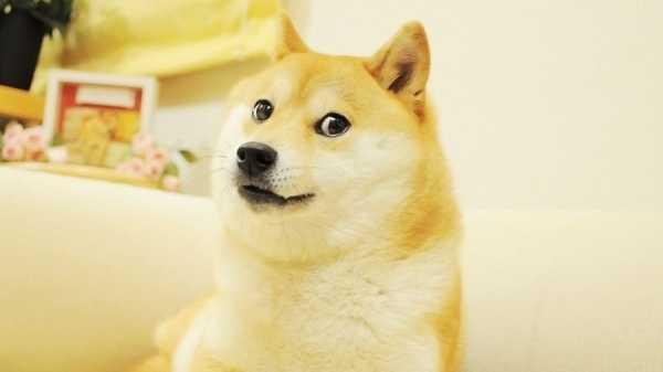 Та самая собака-мем, чье изображение использовано в DogeCoin